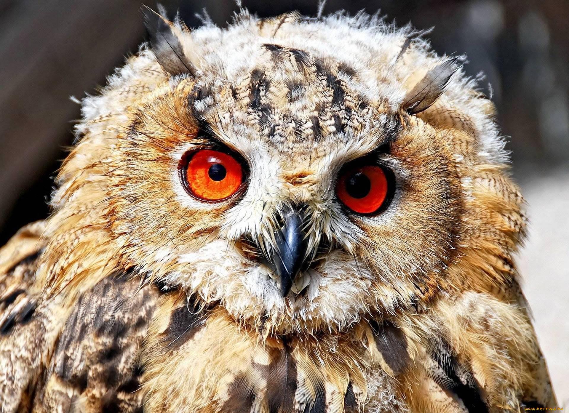 Испуганная сова картинка